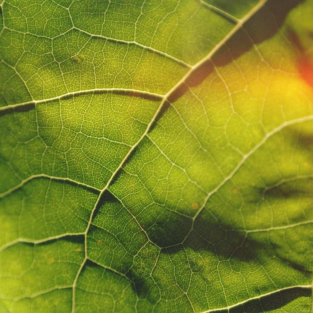 papers.co-vg58-leaf-flare-nature-wood-love-pattern-ipad-mini