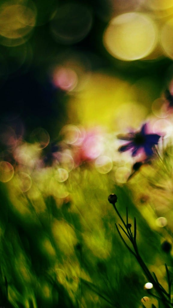 Nature-Flower-Bokeh-Spring-Days-Dark-iPhone-6-plus-wallpaper-ilikewallpaper_com