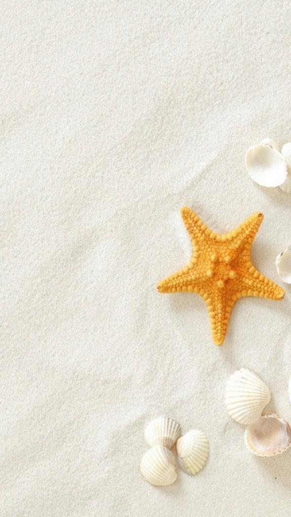 Pure-Seaside-Beach-Starfish-Seashell-iPhone-6-plus-wallpaper-ilikewallpaper_com