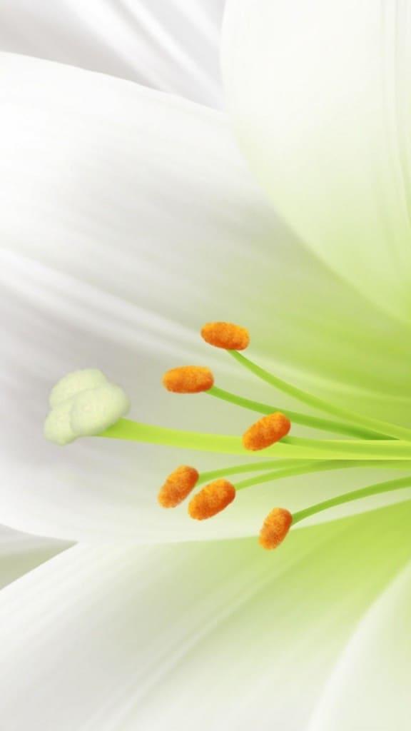 Pure-White-Lily-Flower-Macro-iPhone-6-plus-wallpaper-ilikewallpaper_com