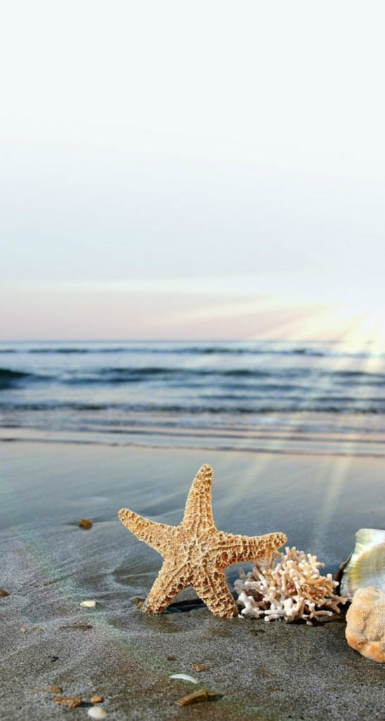 Starfish-Sun-Waves-Beach--iphone-5s-parallax-wallpaper-ilikewallpaper_com