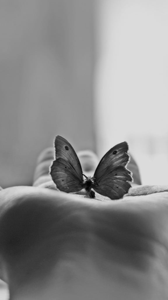 Butterfly-Hand-Black-White-Art-iphone-6-wallpaper-ilikewallpaper_com