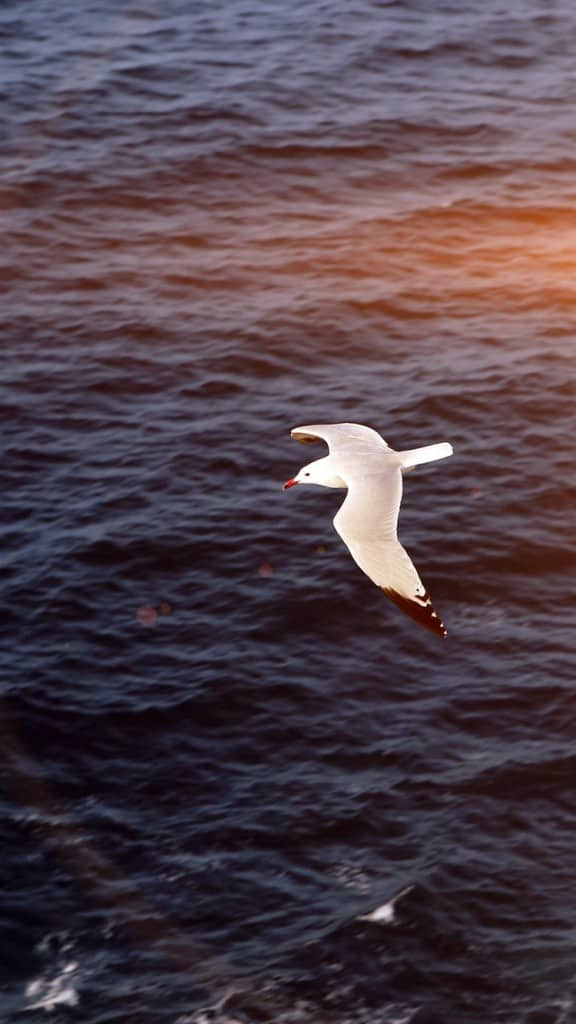 Seagull-Bird-Sea-Ocean-Animal-Nature-Flare-iPhone-6-wallpaper-ilikewallpaper_com_750