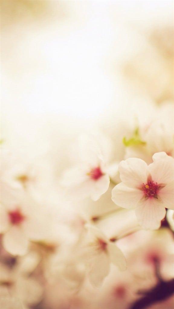 Blossom-Cherry-Spring