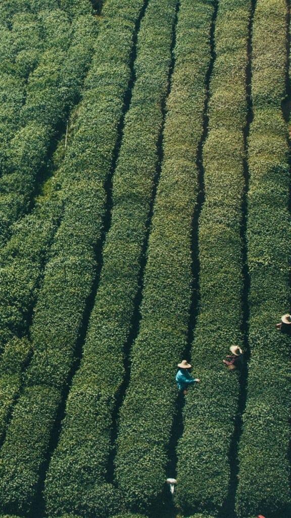 Farmer-Green-Nature-Field-Mountain-iPhone-6