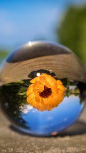 ball-flower-glass-blurring-iphone-6-plus-wallpaper