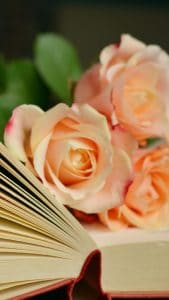 book-roses-bouquet-reading-iphone-6-plus-wallpaper